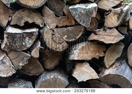 Woodpile. Firewood Stacked In A Woodpile. Old Tree Rotting In The Woods.