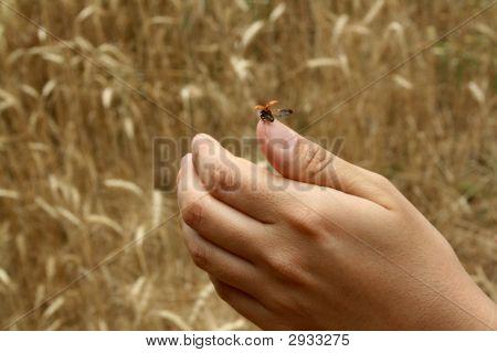 A Ladybird On A Hand