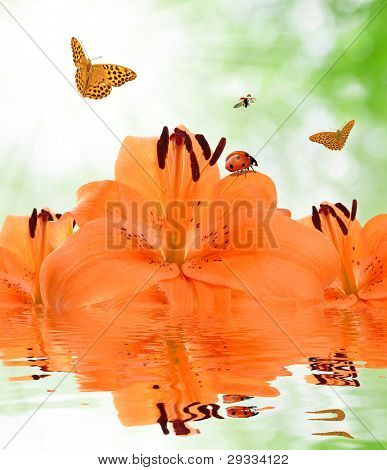 orange lily with butterflies and ladybugs poster