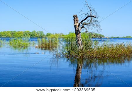 Summer landscape - lonely summer tree at the small island in summer sunny day. The Ilmen lake, Veliky Novgorod, Russia