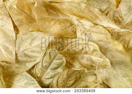 Closeup Of Dry Leaves, Abstract Nature Background