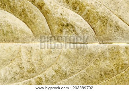 Macro Of Dry Leaf For Background Use