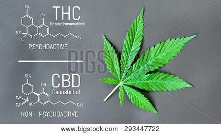 Cbd Cannabis Formula. Structural Model Of Cannabidiol And Tetrahydrocannabinol Molecule. Medicinal H