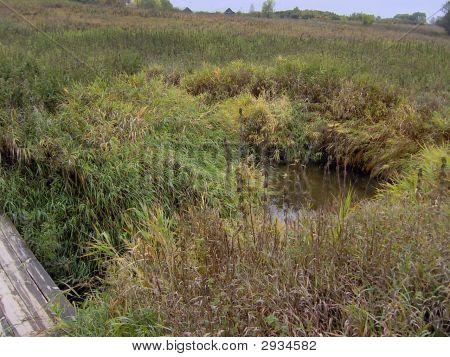 Stream gewachsen gras