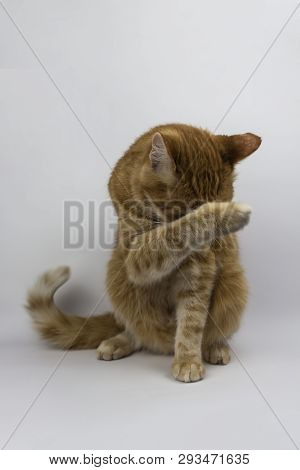 Red Cat Looks Into The Camera. Pictures Of Cats, Cat Eyes, Cat Eyes, Cute Cat, Cat Drawings, Cat Dra
