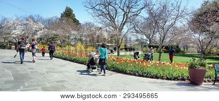 Dallas,texas - March 18,  2019 - Young Familes Walking The Spring Day At The Dallas Arboretum Garden