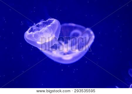 This Is A Close Up Of A Jellyfish