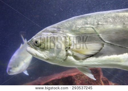 This Is A Close Up Of A Fish