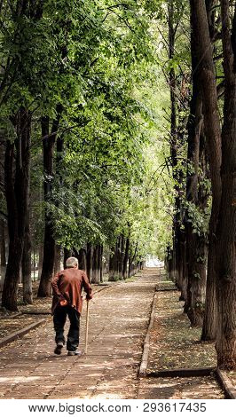Lonely Decrepit Old Man With A Cane Walking Down The Alley In The Park, Summer
