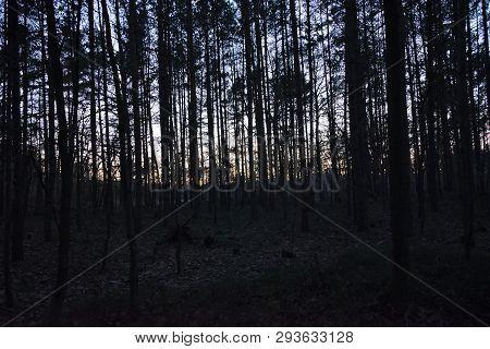 Forest After Sunset In Czech Turist Region Machuv Kraj
