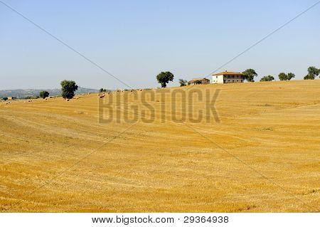 Summer Landscape In Lazio (italy)
