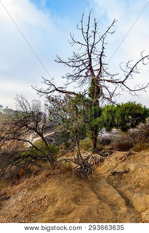 Los Angeles Hillside Drought And Fire Damage