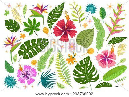 Set Of Vector Cartoon Rainforest Floral Elements