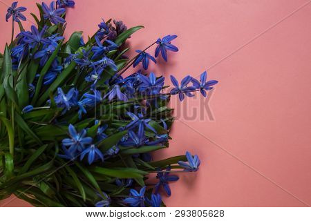Blue Flower. Flower In Garden At Sunny Summer Or Spring Day. Flower For Postcard Beauty Decoration A