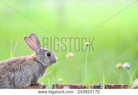 Cute Rabbit Sitting On Brick And Green Field Spring Meadow / Easter Bunny Hunt For Easter Egg On Gra