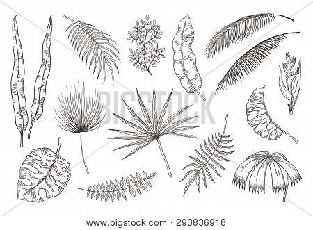Hand Drawn Exotic Leaves. Tropical Plants, Nature Floral Drawing, Monstera And Banana Palm Leaves. V