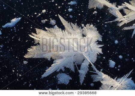 White Snowflake On Black Ice.