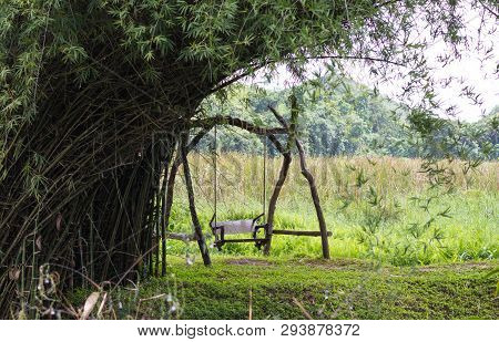 Wooden Swing Under The Bamboo Tree Fields
