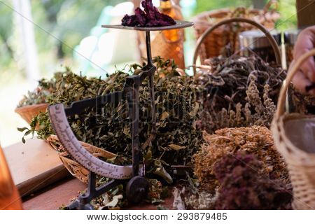 herbalist gardender  small business owner picking gathering fresh herbs for alternative medicine tea and poutting on balance
