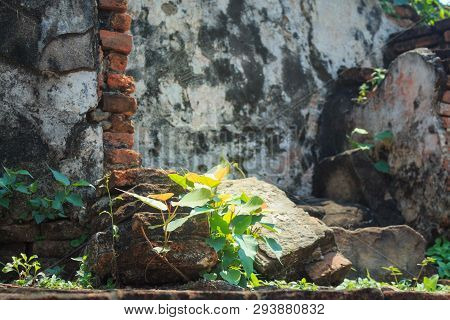 Little Growing Leaf Among Temple Ancient Old Brick Wall