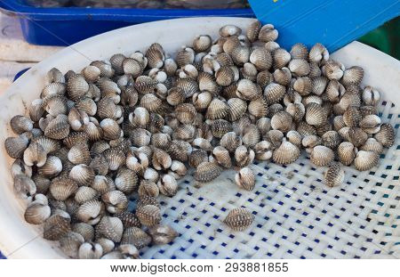 Ice Cockles Fresh In Market For Scallop Cockles