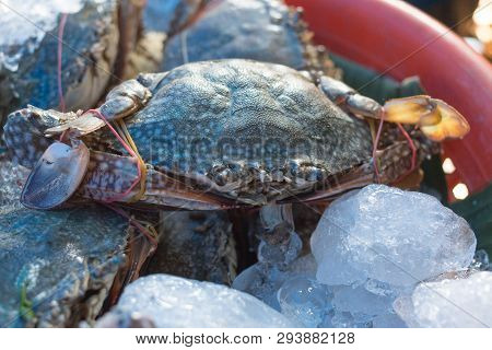 Ice Sea Crab Fresh In Seafood Market