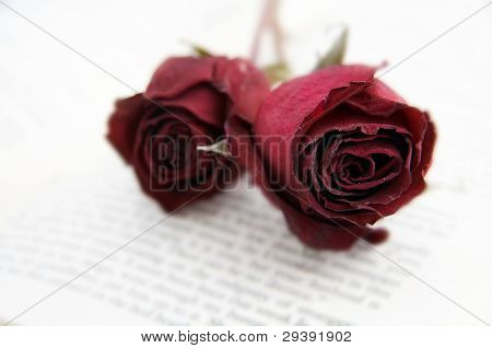 wilted roses on a book