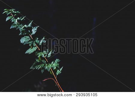 Green Forest Floor Leaves Growing With Space For Text To Be Written