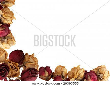 Autumn background with drying roses