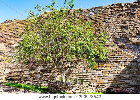 Shlisselburg, St. Petersburg, Russia - August 8, 2018: Apple Tree At The Place Of Execution Of Alexa