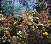 seascape of colorful coral and reef. poster
