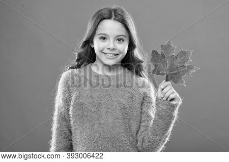 Maple Syrup. Little Child Hold Maple Leaf. Small Girl Smiling With Maple Leaf. Maple Syrup Is Often