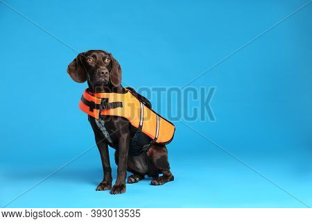 Dog Rescuer In Life Vest On Light Blue Background. Space For Text