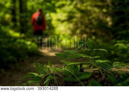 Backpack Forest Hiking Concept Photography Of Unfocused Silhouette In Red Coat Surrounded By Green F
