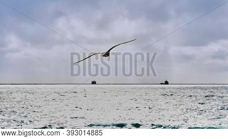 A Seagull Flies Into The Open Sea. Sea Landscape With Drifting Tankers And A Flying Seagull.
