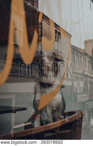 Frome, Uk - October 05, 2020: Dog On A Chair Inside A Pub In Frome, A Small Market Town In The Count