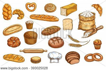 Bread, Bakery Sketch And Pastry, Baked Food Vector Icons. Bakery Bread Baguette, Croissant And Wheat