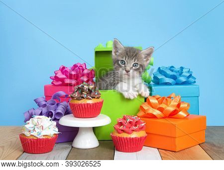 Cute Gray And White Kitten Peaking Out Of A Green Birthday Present Surrounded By Colorful Boxes With