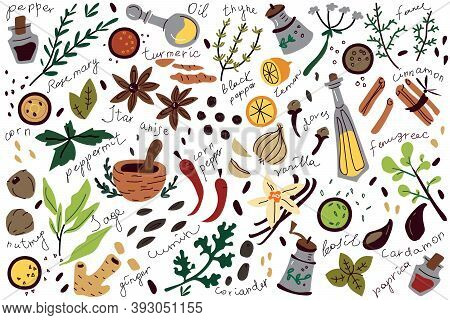 Doodle Set. Collection Of Sketches Different Condiments Herbs Coriander Carnation Ginger Pepper Isol