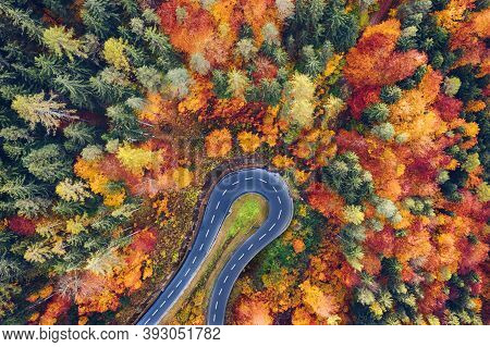 Aerial View Of Forest And Trees In Autumn With A Tight Curve Of A Mountain Road. Picture Of A Road T