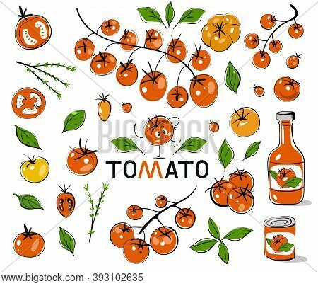 Red Tomatoes. Hand Drawn Tomatoes With Black Outline. Vector Set Of Tomato Branches. Set With Hand D