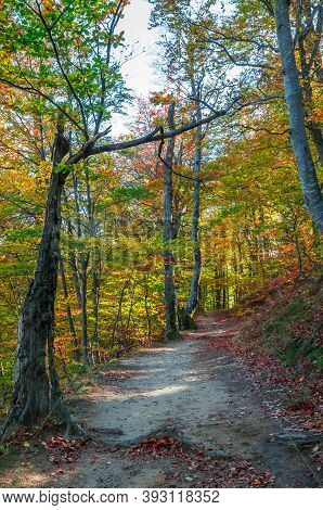 Autumn In Cozia, Carpathian Mountains, Romania. Vivid Fall Colors In Forest. Scenery Of Nature With