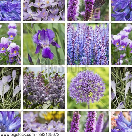 Collage Of Violet  Flowers. Violet  Color - Trendy Color Of The Season 2018