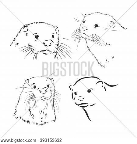 Hand Drawn Sketch Of A Smooth Coated Otter Or Aonyx Cinerea Or Asian Small Clawed Otter, Otter Anima