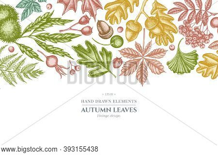 Design With Pastel Colored Fern, Dog Rose, Rowan, Ginkgo, Maple, Oak, Horse Chestnut, Chestnut Hawth