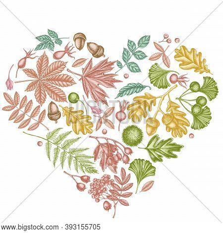Heart Design With Pastel Fern, Dog Rose, Rowan, Ginkgo, Maple, Oak, Horse Chestnut, Chestnut Hawthor