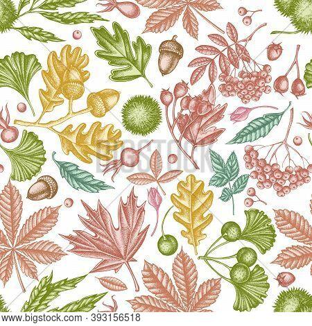 Seamless Pattern With Hand Drawn Pastel Fern, Dog Rose, Rowan, Ginkgo, Maple, Oak, Horse Chestnut, C