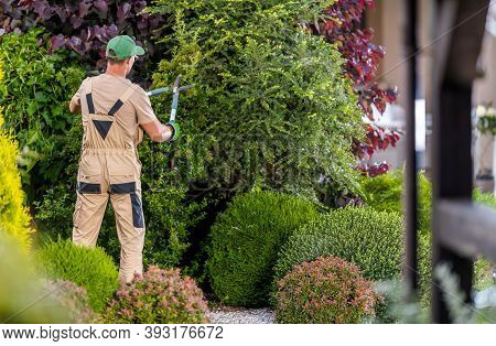 Professional Garden Worker In His 40s Trimming Decorative Trees Inside Large And Beautiful Mature Re