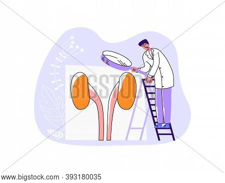 Vector Illustration Of Doctor Examining Urinary System Through Enlarged Magnifying Glass. Concept In