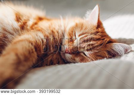 Ginger Cat Relaxing On Couch In Living Room. Pet Having Good Time Sleeping At Home